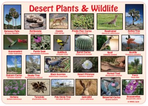 Desert Plants & Wildlife Placemat